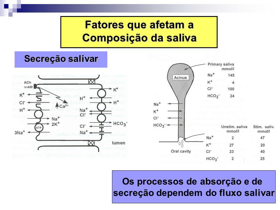 Os processos de absorção e de secreção dependem do fluxo salivar Fatores que afetam a Composição da saliva Secreção salivar Secreção salivar