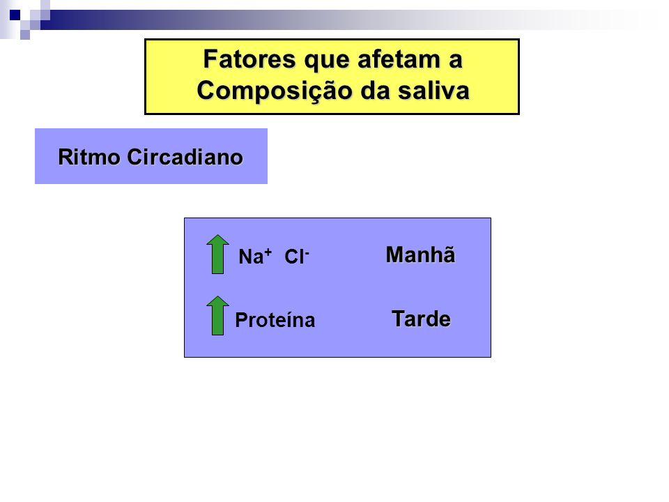 Ritmo Circadiano Ritmo Circadiano Na + Cl - Manhã Proteína Tarde Fatores que afetam a Composição da saliva