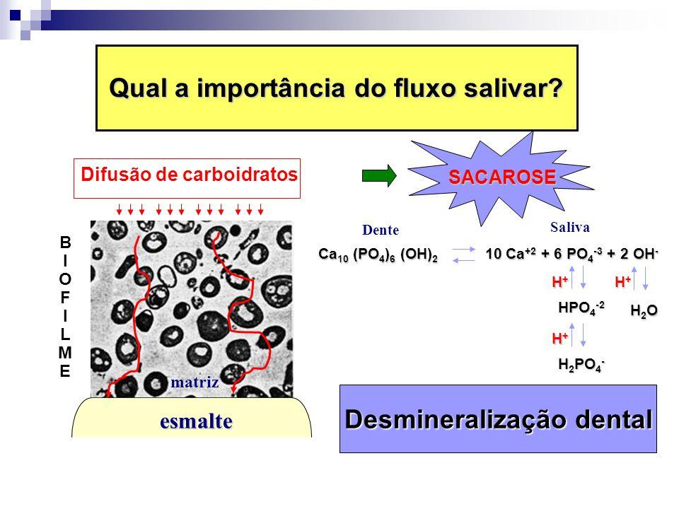 Qual a importância do fluxo salivar? BIOFILMEBIOFILME esmalte matriz Difusão de carboidratos SACAROSE Ca 10 (PO 4 ) 6 (OH) 2 10 Ca +2 + 6 PO 4 -3 + 2