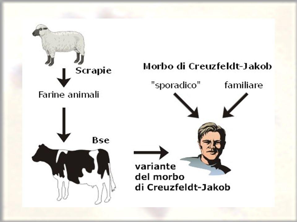 Que animais são testados?