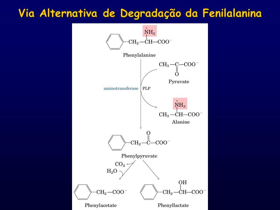 Via Alternativa de Degradação da Fenilalanina
