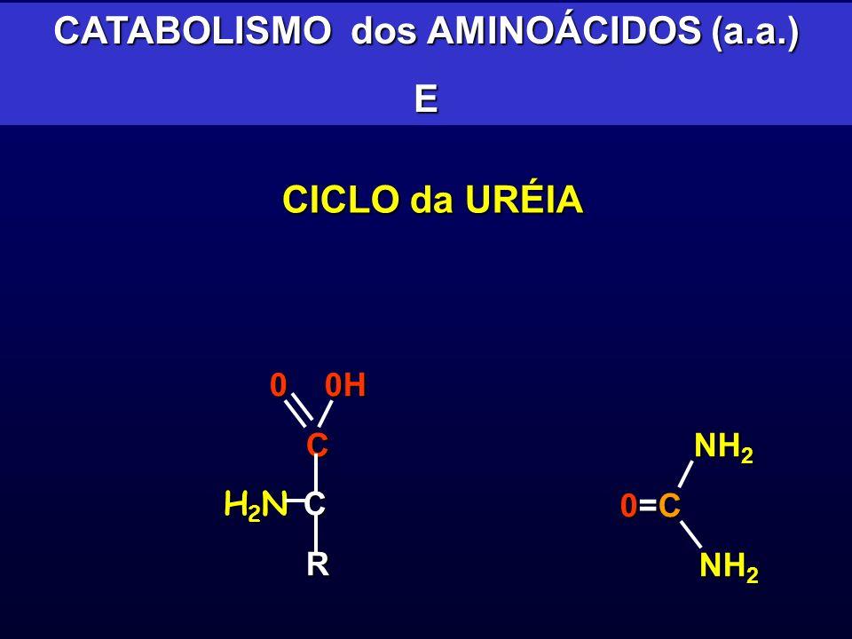 0 0H 0 0H C H 2 N C H 2 N C R CATABOLISMO dos AMINOÁCIDOS (a.a.) E CICLO da URÉIA NH 2 NH 2 0=C NH 2 NH 2
