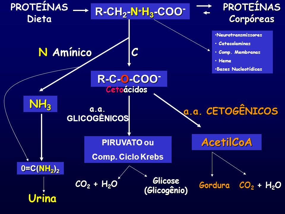 R-CH 2 -N + H 3 -COO R-CH 2 -N + H 3 -COO - PROTEÍNAS Dieta PROTEÍNAS Corpóreas R-C-O-COO R-C-O-COO - NH 3 0=C(NH 2 ) 2 Urina N Amínico Cetoácidos Neu