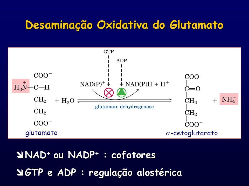 glutamato -cetoglutarato NAD + ou NADP + : cofatores NAD + ou NADP + : cofatores GTP e ADP : regulação alostérica GTP e ADP : regulação alostérica Des