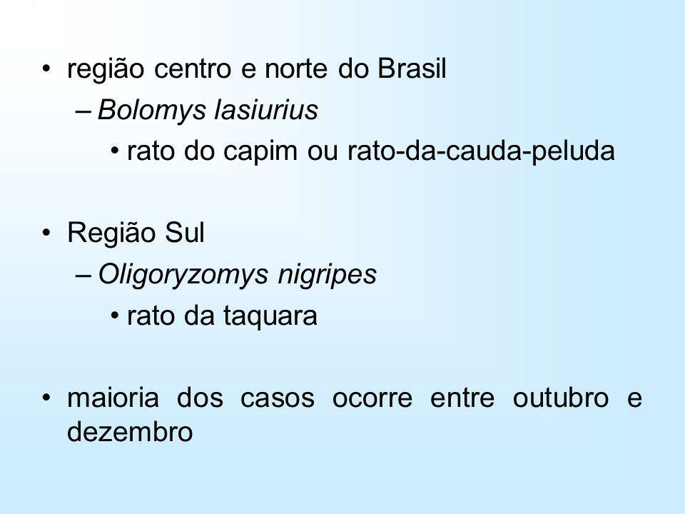 região centro e norte do Brasil –Bolomys lasiurius rato do capim ou rato-da-cauda-peluda Região Sul –Oligoryzomys nigripes rato da taquara maioria dos