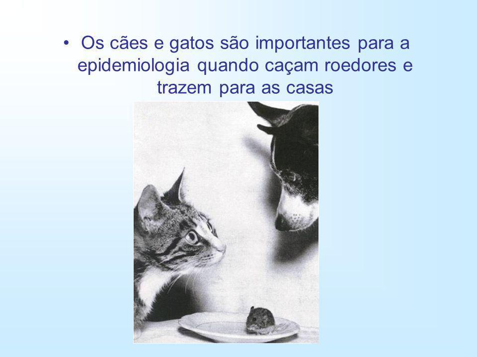 Os cães e gatos são importantes para a epidemiologia quando caçam roedores e trazem para as casas