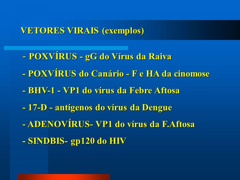 VETORES VIRAIS (exemplos) - POXVÍRUS - gG do Vírus da Raiva - POXVÍRUS do Canário - F e HA da cinomose - BHV-1 - VP1 do vírus da Febre Aftosa - 17-D -