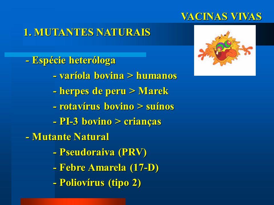 VACINAS VIVAS 1. MUTANTES NATURAIS - Espécie heteróloga - varíola bovina > humanos - herpes de peru > Marek - rotavírus bovino > suínos - PI-3 bovino