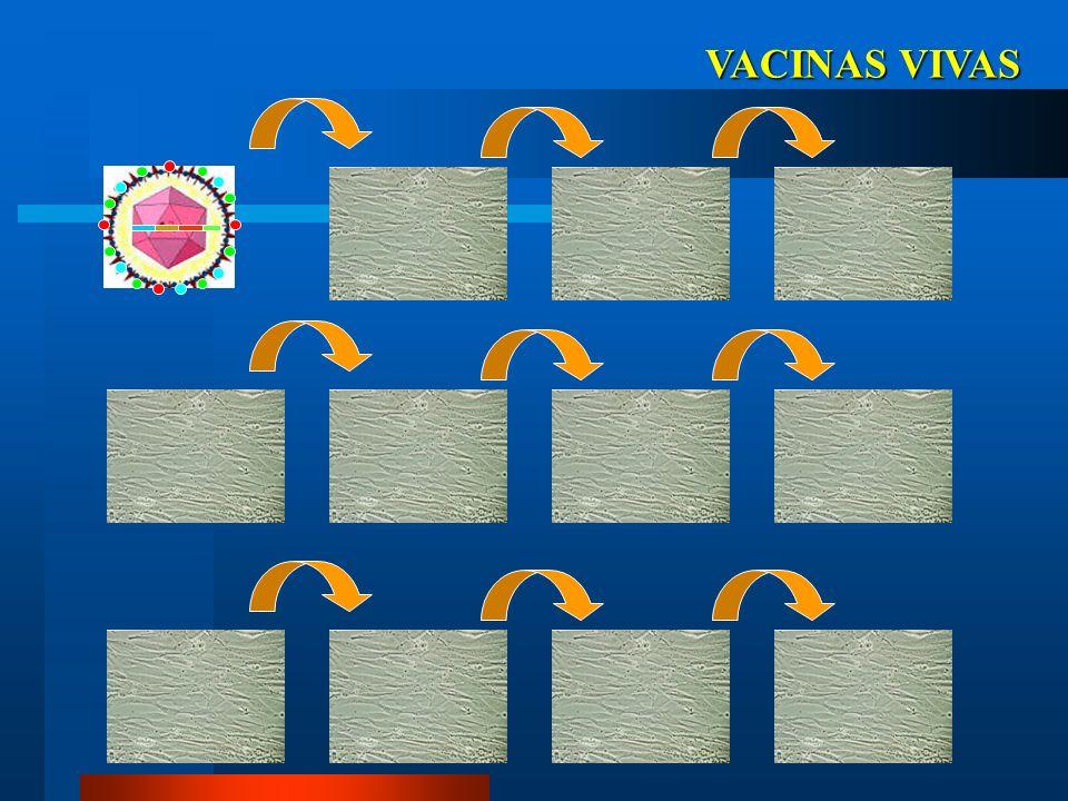 VACINAS VIVAS