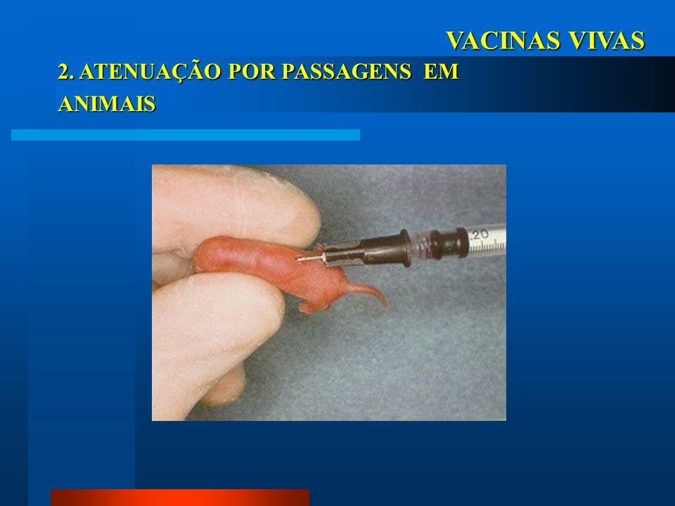 VACINAS VIVAS 2. ATENUAÇÃO POR PASSAGENS EM OVOS EMBRIONADOS OVOS EMBRIONADOS