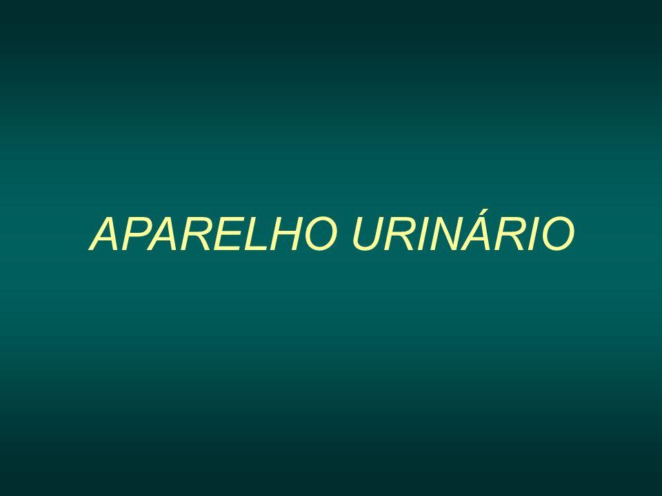 APARELHO URINÁRIO