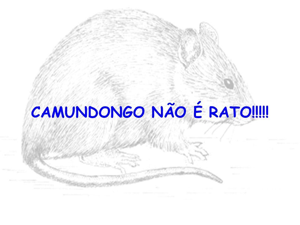 CAMUNDONGO NÃO É RATO!!!!!