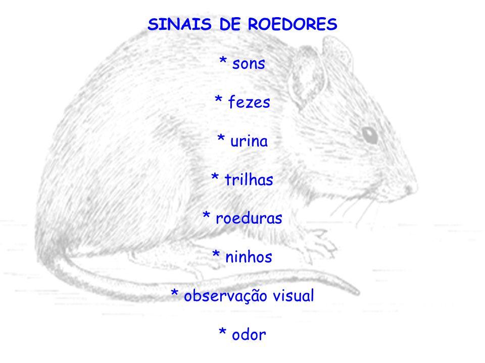 SINAIS DE ROEDORES * sons * fezes * urina * trilhas * roeduras * ninhos * observação visual * odor
