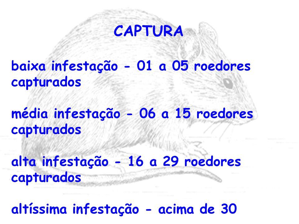 CAPTURA baixa infestação - 01 a 05 roedores capturados média infestação - 06 a 15 roedores capturados alta infestação - 16 a 29 roedores capturados al