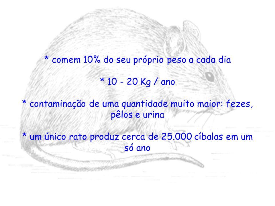 * comem 10% do seu próprio peso a cada dia * 10 - 20 Kg / ano * contaminação de uma quantidade muito maior: fezes, pêlos e urina * um único rato produ