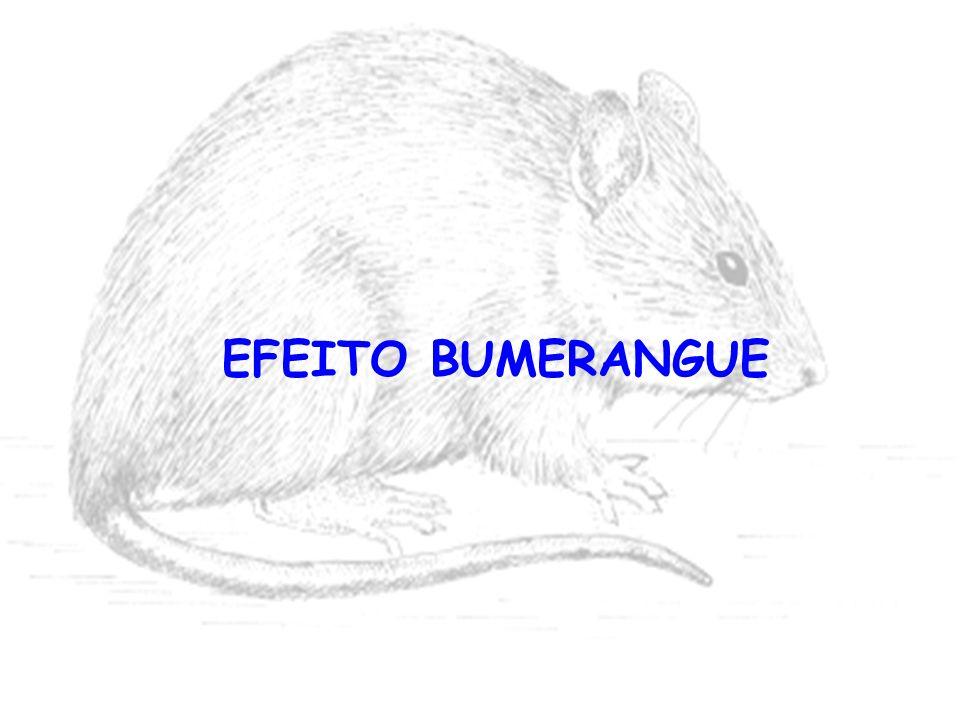 EFEITO BUMERANGUE