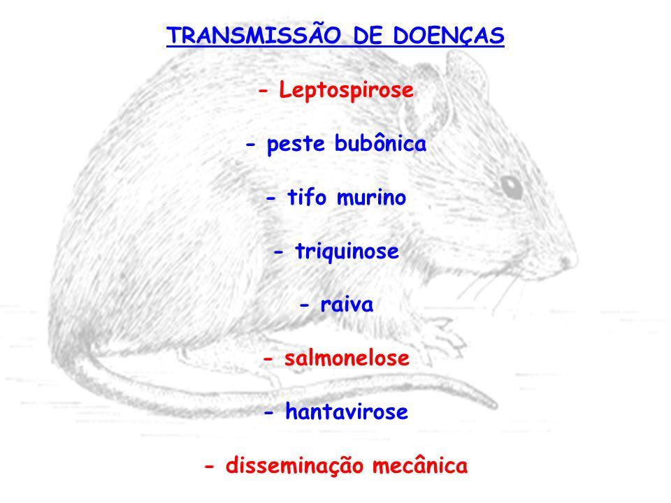 TRANSMISSÃO DE DOENÇAS - Leptospirose - peste bubônica - tifo murino - triquinose - raiva - salmonelose - hantavirose - disseminação mecânica