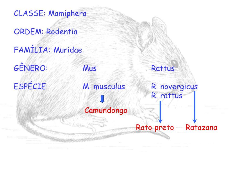CLASSE: Mamiphera ORDEM: Rodentia FAMÍLIA: Muridae GÊNERO:MusRattus ESPÉCIEM. musculusR. novergicus R. rattus Ratazana Camundongo Rato preto