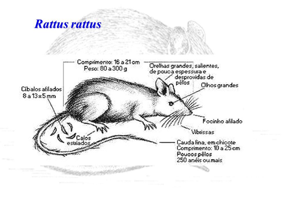 * atrair o roedor * ser apetecível - induzir o roedor a comer de forma contínua - deve ser tão interessante a ponto de ele deixar de consumir seu alimento habitual * cor * consistência: preferem tamanhos maiores e não farinhas * adição de atrativos especiais *adição de eméticos * teor proteína deve ser = ou maior a 5%