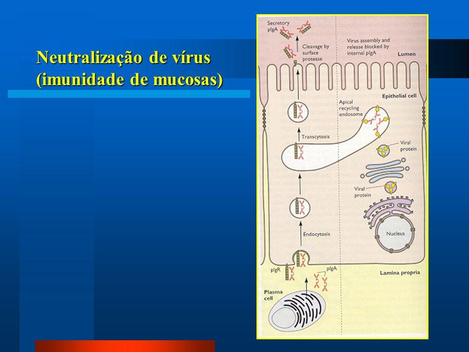 Neutralização de vírus (imunidade de mucosas)