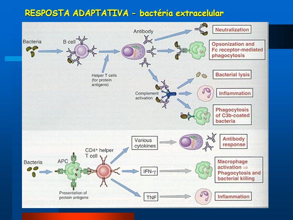 RESPOSTA ADAPTATIVA - bactéria extracelular