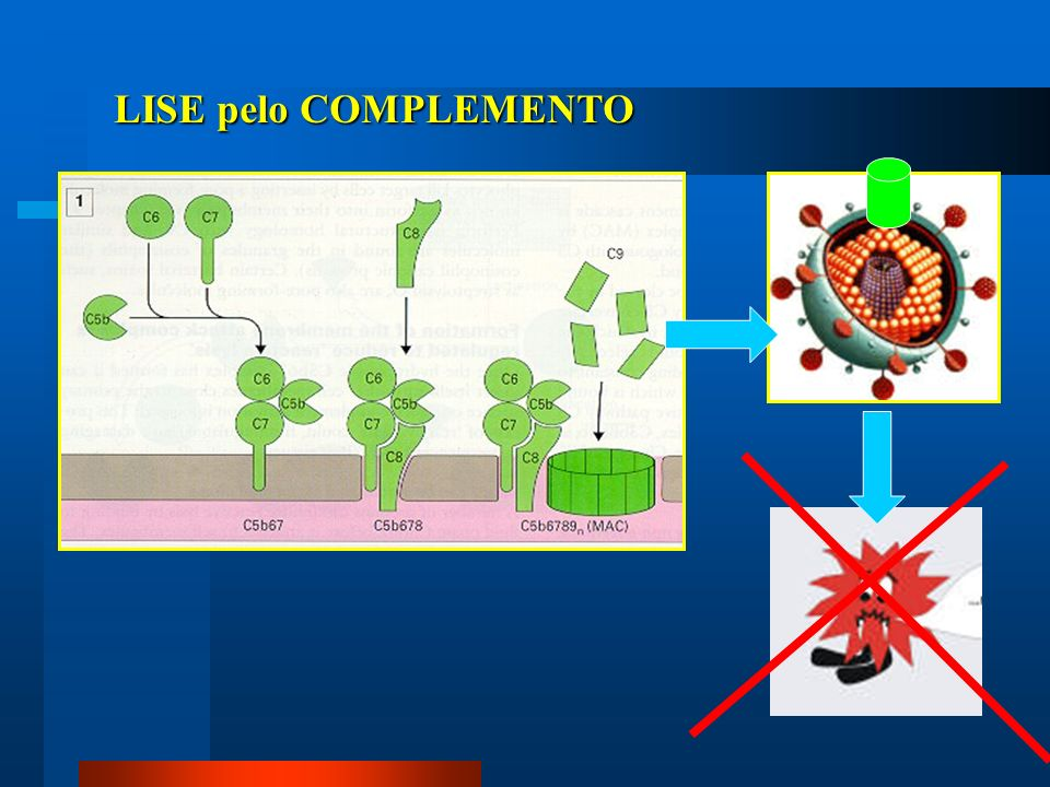 Mecanismos de evasão do sistema imune bactéria extracelular