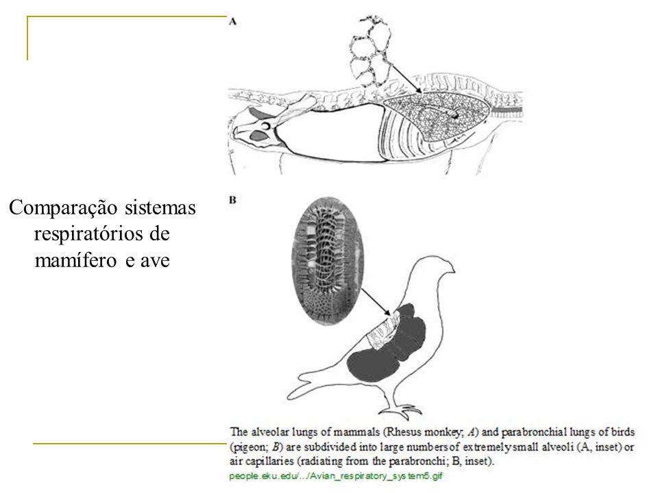 Comparação sistemas respiratórios de mamífero e ave