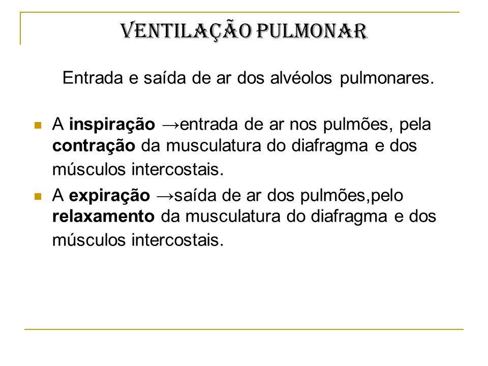 Ventilação pulmonar Entrada e saída de ar dos alvéolos pulmonares. A inspiração entrada de ar nos pulmões, pela contração da musculatura do diafragma