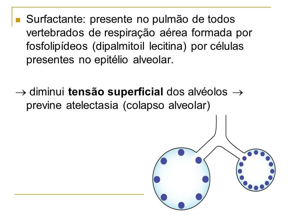 Surfactante: presente no pulmão de todos vertebrados de respiração aérea formada por fosfolipídeos (dipalmitoil lecitina) por células presentes no epi