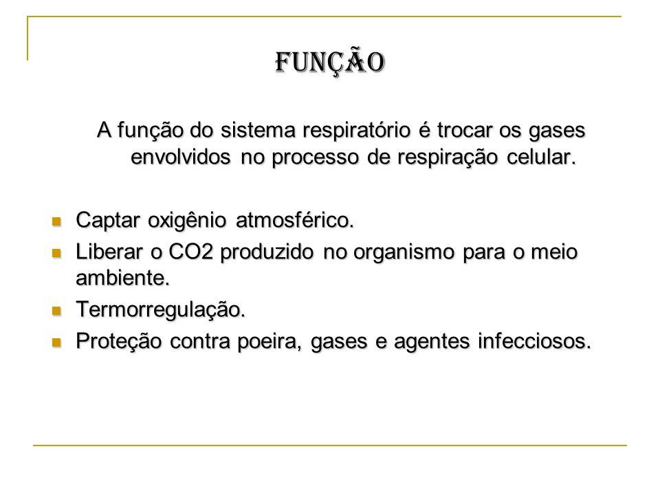 Função A função do sistema respiratório é trocar os gases envolvidos no processo de respiração celular. Captar oxigênio atmosférico. Captar oxigênio a