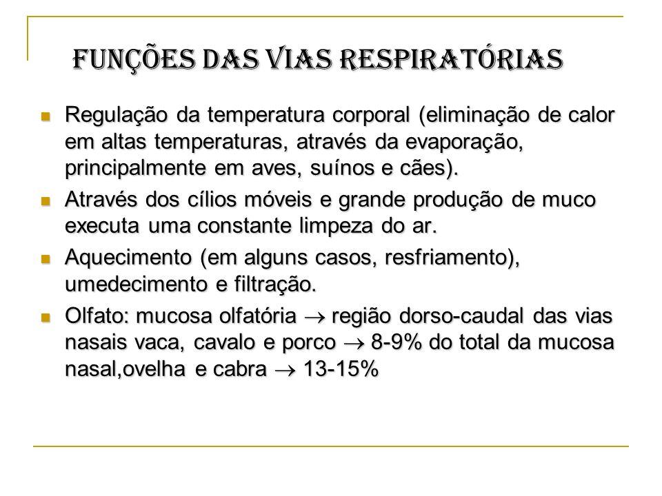 Funções das vias respiratórias Funções das vias respiratórias Regulação da temperatura corporal (eliminação de calor em altas temperaturas, através da