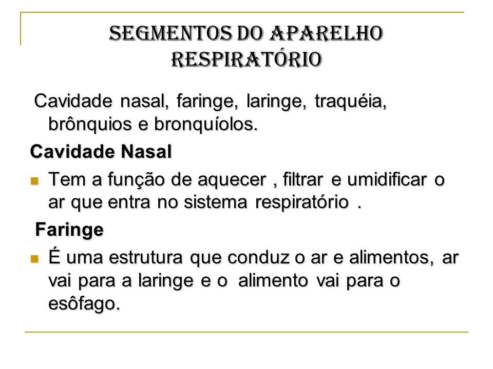 SEGMENTOS DO APARELHO RESPIRATÓRIO Cavidade nasal, faringe, laringe, traquéia, brônquios e bronquíolos. Cavidade nasal, faringe, laringe, traquéia, br