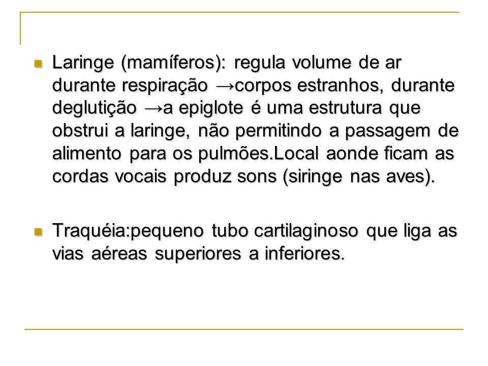 Laringe (mamíferos): regula volume de ar durante respiração corpos estranhos, durante deglutição a epiglote é uma estrutura que obstrui a laringe, não