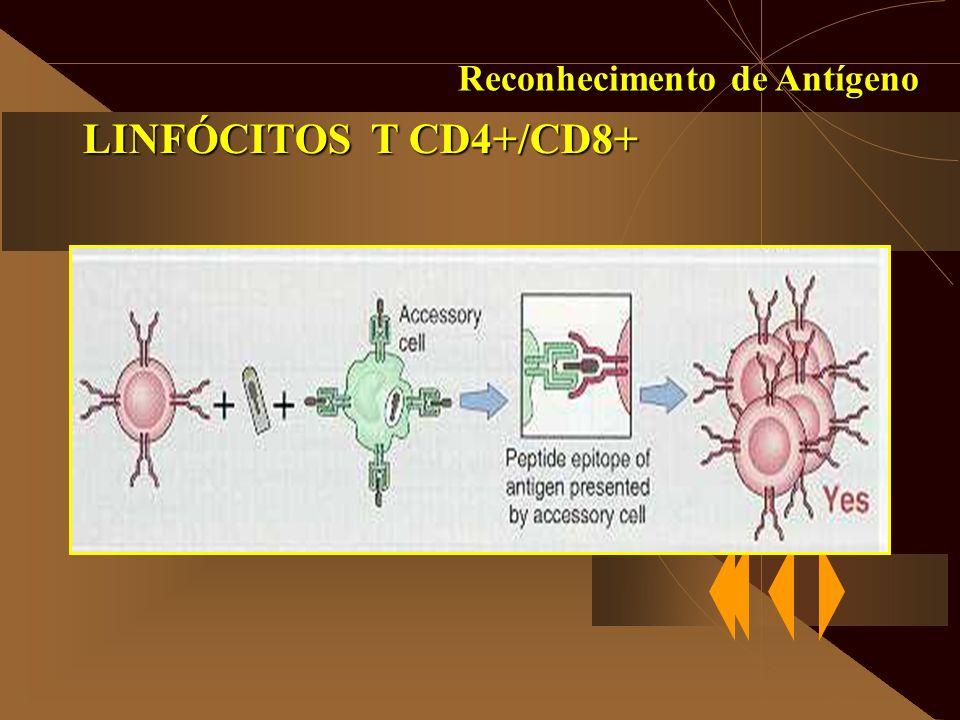 Reconhecimento de Antígeno LINFÓCITOS T CD4+/CD8+