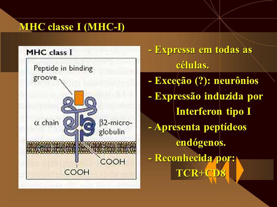 MHC classe I (MHC-I) - Expressa em todas as células. - Exceção (?): neurônios - Expressão induzida por Interferon tipo I - Apresenta peptídeos endógen