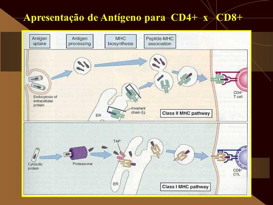Apresentação de Antígeno para CD4+ x CD8+