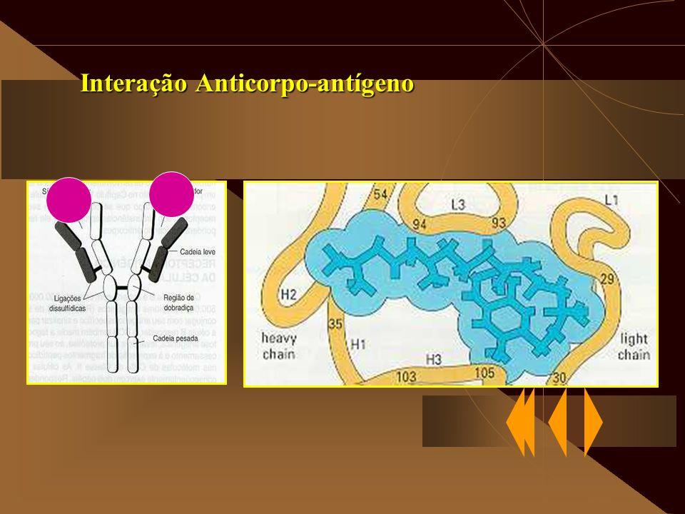 Interação Anticorpo-antígeno