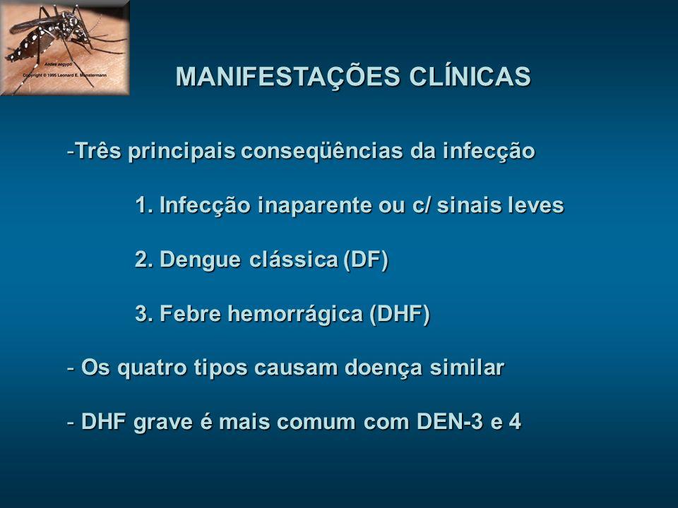 MANIFESTAÇÕES CLÍNICAS -Três principais conseqüências da infecção 1. Infecção inaparente ou c/ sinais leves 2. Dengue clássica (DF) 3. Febre hemorrági