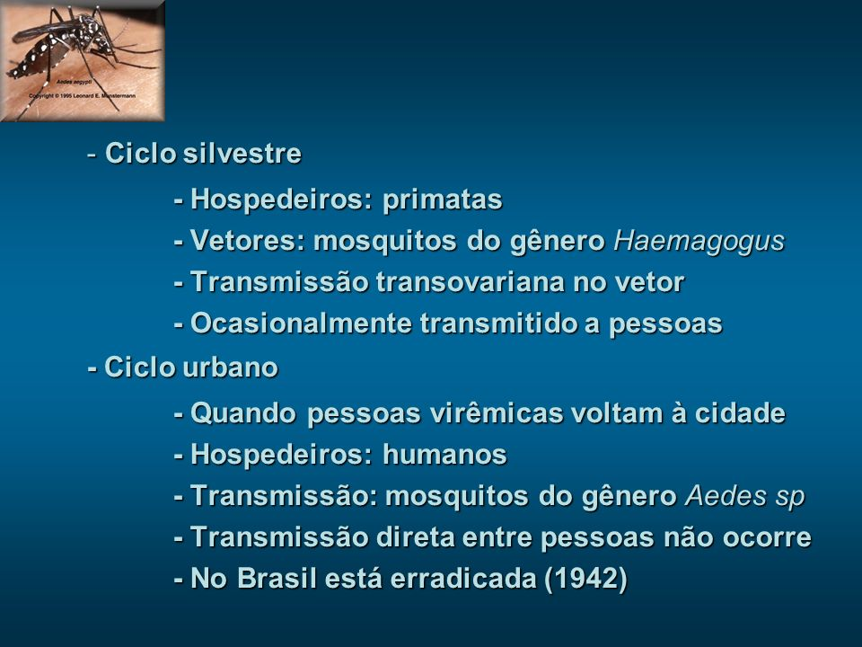 - Ciclo silvestre - Hospedeiros: primatas - Vetores: mosquitos do gênero Haemagogus - Transmissão transovariana no vetor - Ocasionalmente transmitido