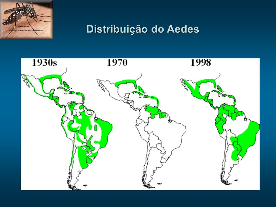 Distribuição dos sorotipos (2005)