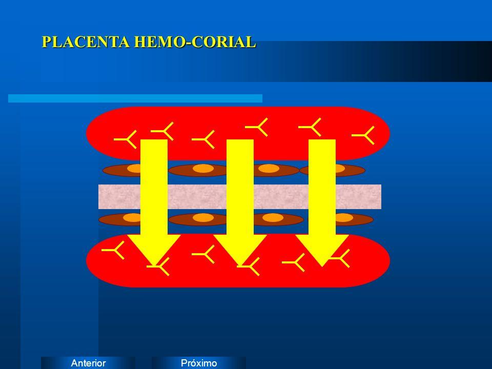PróximoAnterior PLACENTA HEMO-CORIAL