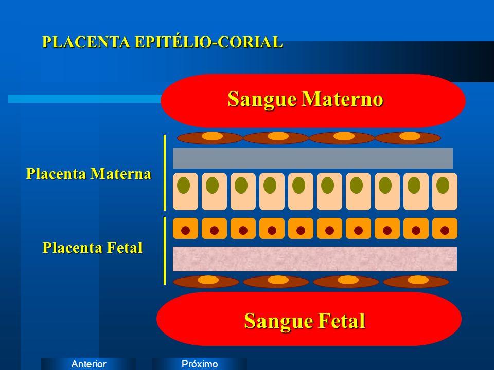 PróximoAnterior Sangue Materno Sangue Fetal Placenta Materna Placenta Fetal PLACENTA EPITÉLIO-CORIAL