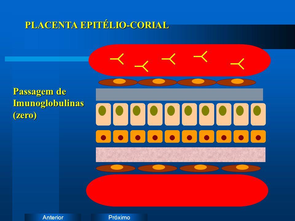 PróximoAnterior PLACENTA EPITÉLIO-CORIAL Passagem de Imunoglobulinas(zero)