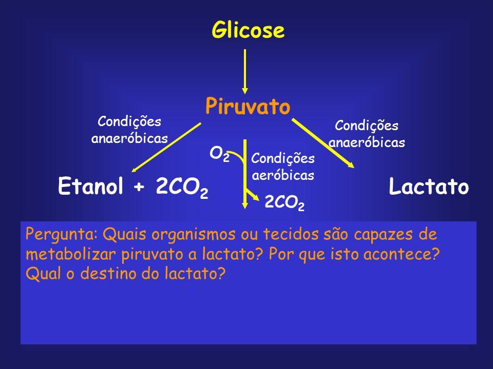 Três tipos de transformações químicas são notáveis na glicólise: 1.Degradação do esqueleto carbônico da glicose para produzir piruvato; 2.Fosforilação