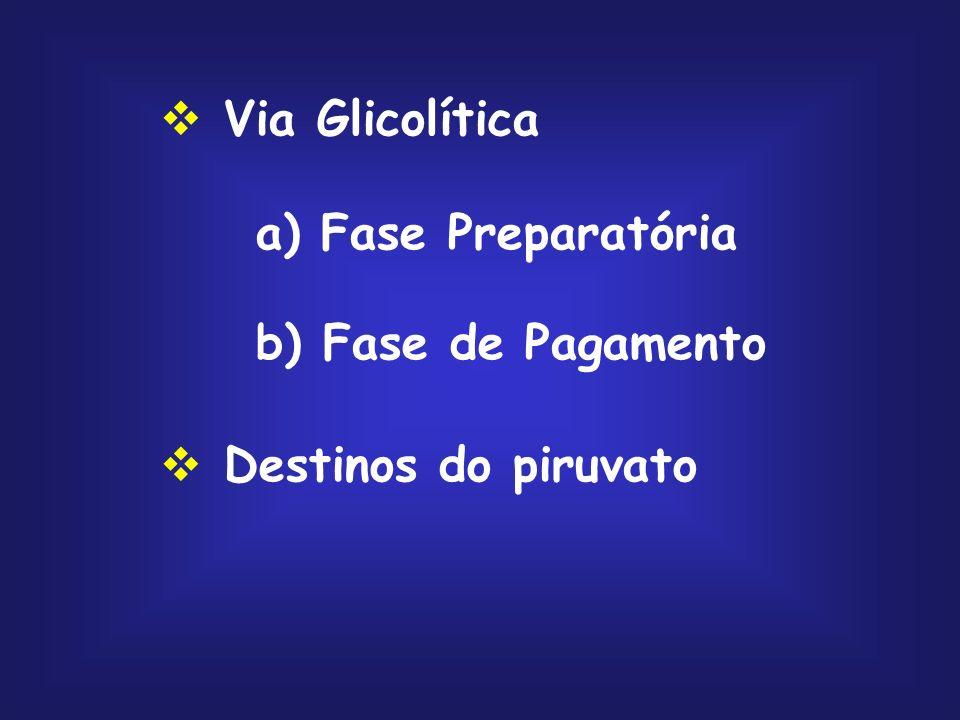 Via Glicolítica a) Fase Preparatória b) Fase de Pagamento Destinos do piruvato