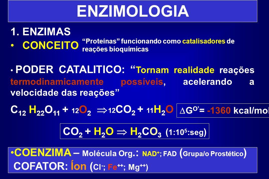 ENZIMOLOGIA 1.ENZIMAS CONCEITO PODER CATALITICO: Tornam realidade reações termodinamicamente possíveis, acelerando a velocidade das reações C 12 H 22