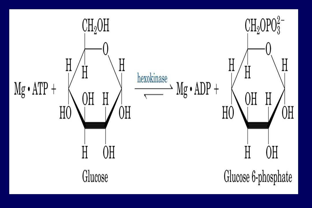 ESPECIFICIDADE - Hidrolases PROTEASE:Hidrolisa (quebra) Proteínas LIPASE:Quebra Lipídios NUCLEASE : DNAse; RNAse GLICOSIDADE ??.