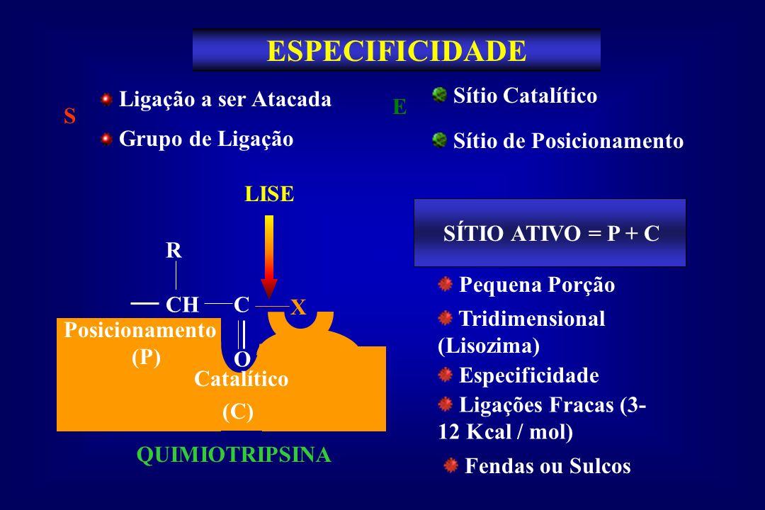 ESPECIFICIDADE S Ligação a ser Atacada Grupo de Ligação Sítio de Posicionamento Sítio Catalítico E R CH C O X LISE QUIMIOTRIPSINA Posicionamento (P) C