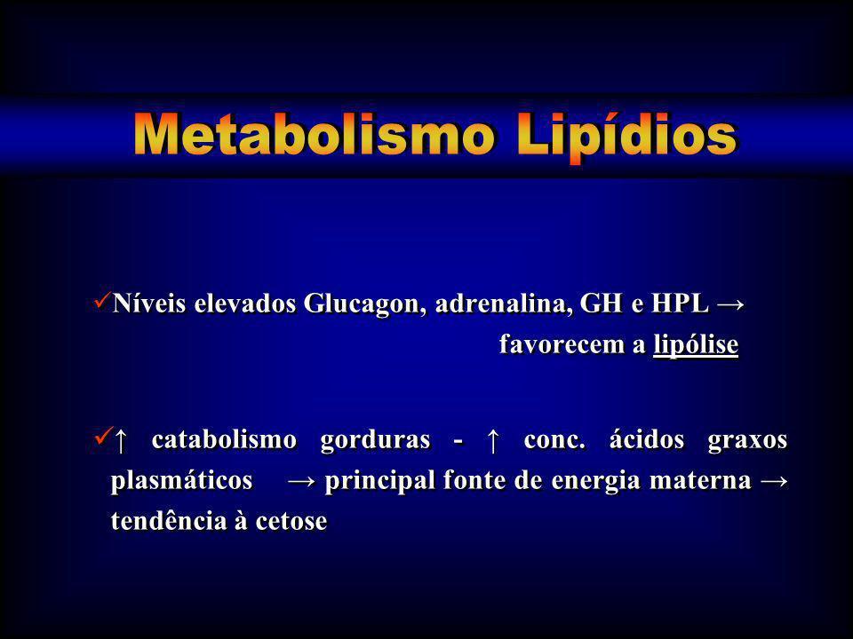 Níveis elevados Glucagon, adrenalina, GH e HPL favorecem a lipólise catabolismo gorduras - conc. ácidos graxos plasmáticos principal fonte de energia