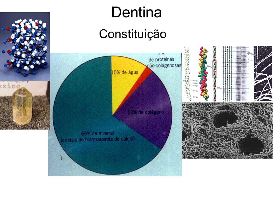 Os componentes orgânicos e inorgânico se misturam para dar a constituição fisiológica da dentina